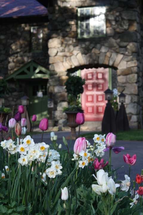 Tulips and Narcissus Blooming at Willowdale Estate Topsfield Massachusetts