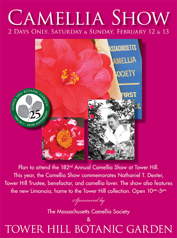 Camellia Show at Tower Hill Botanic Garden