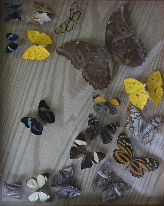 Butterflies Sawyer Free Library