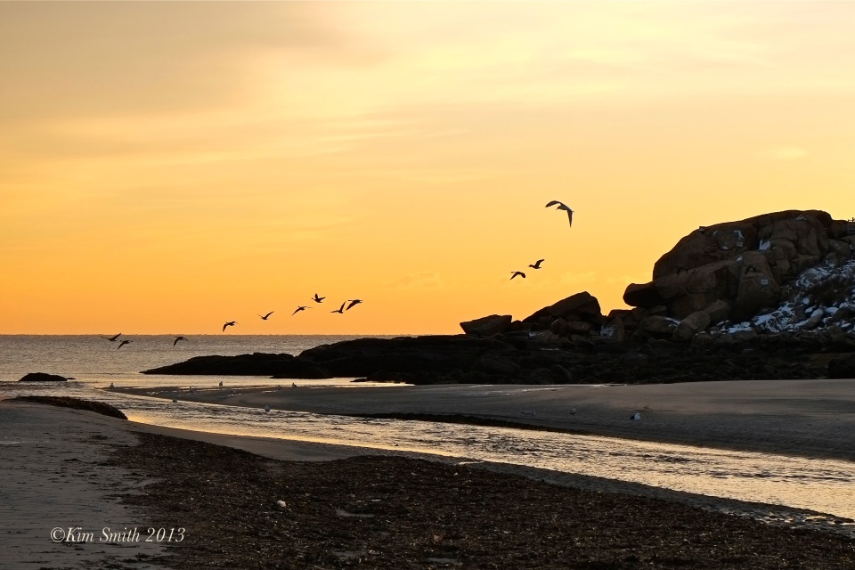 Gloucester Seagull and Geese  ©Kim Smith 2013-1.