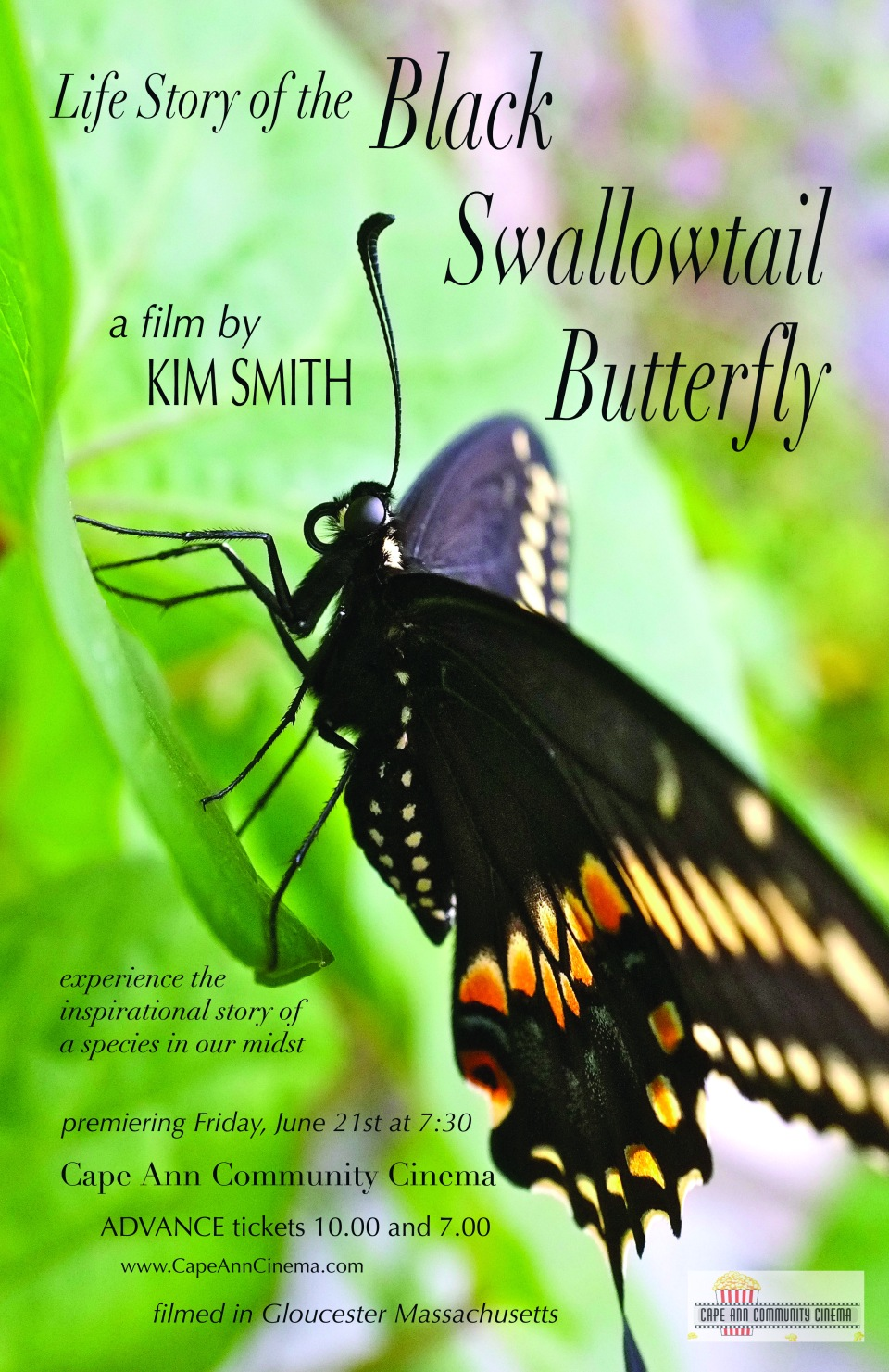 FINAL blog- Seaside graphics  Life Story of the Black Swallowtail Movie poster CACC -1