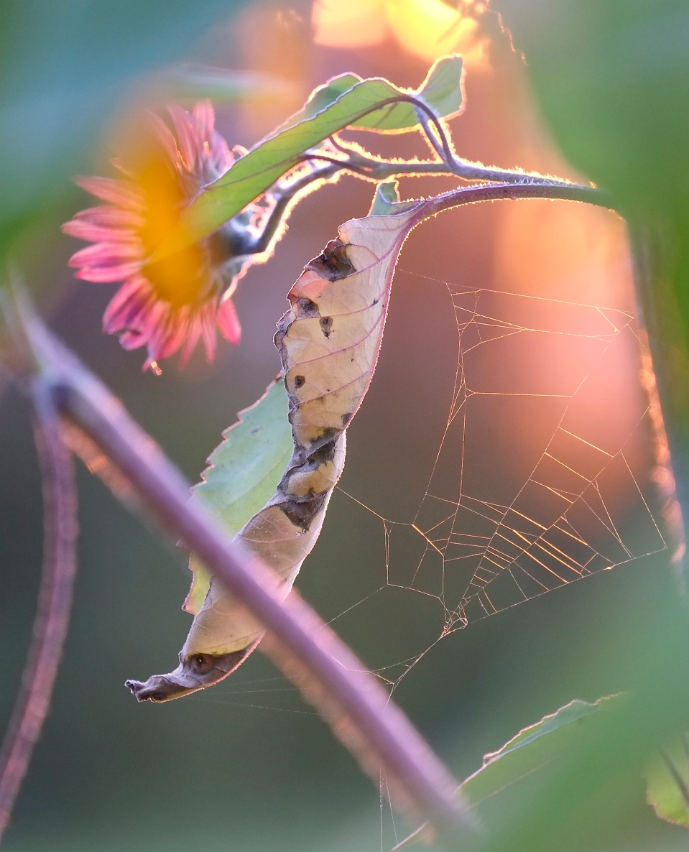 Tithonia and Web © Kim Smith 2013