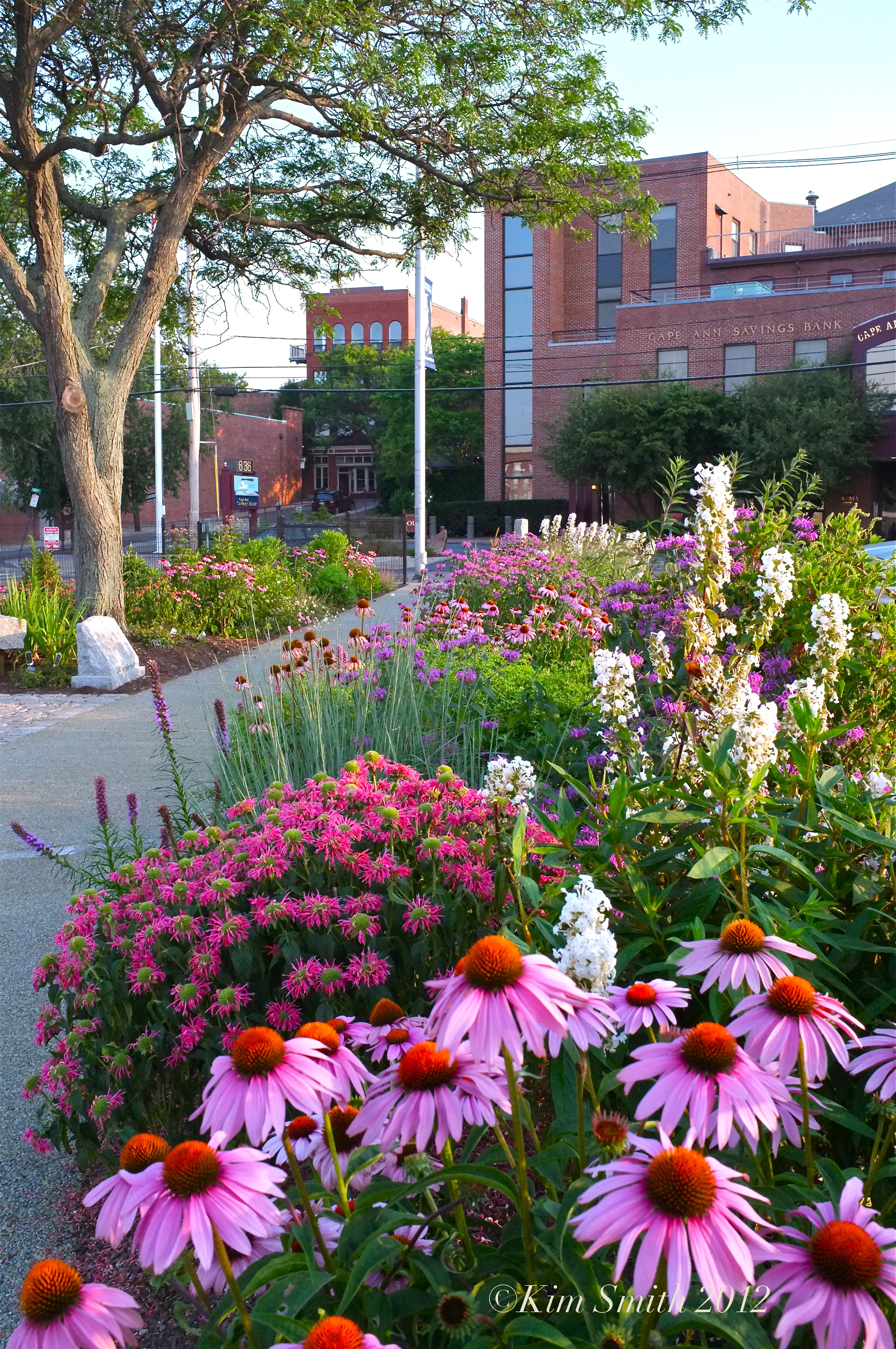 Butterfly Gardens At The Gloucester HarborWalk