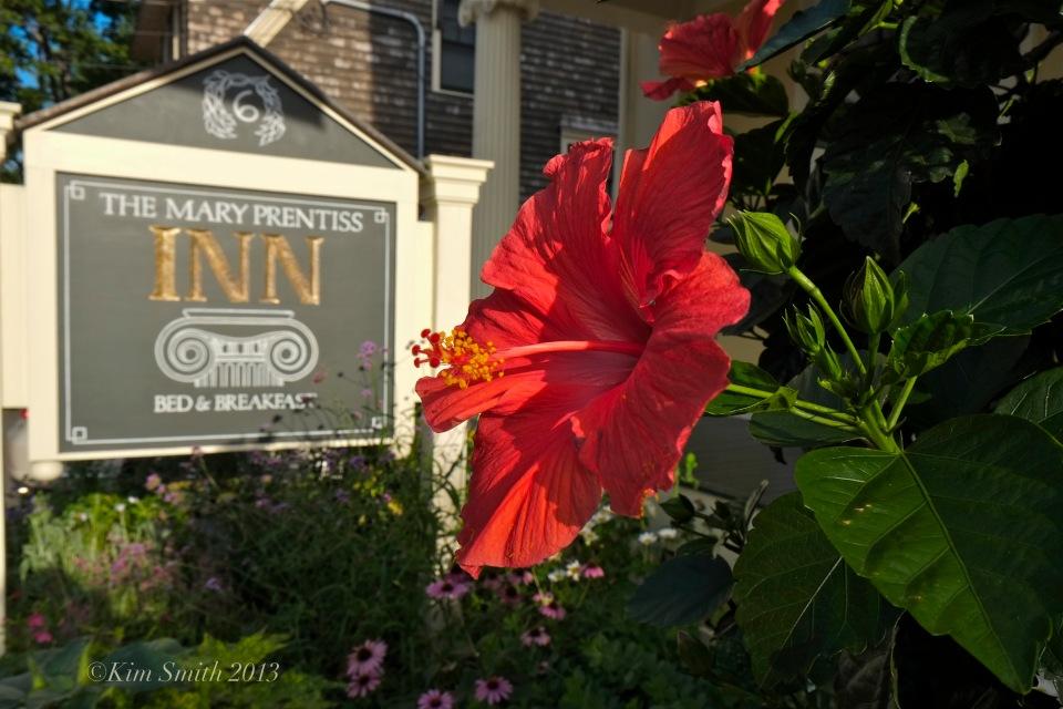 Mary Prentiss Inn hibiscus ©Kim Smith 2013