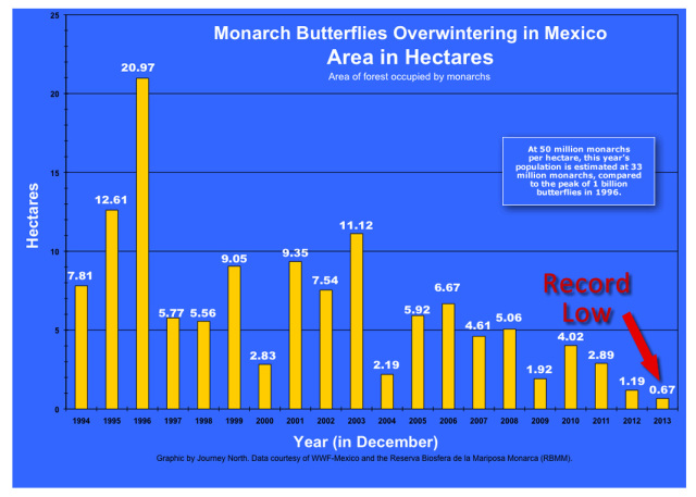 monarch-butterfly-overwintering-graph-journey-north