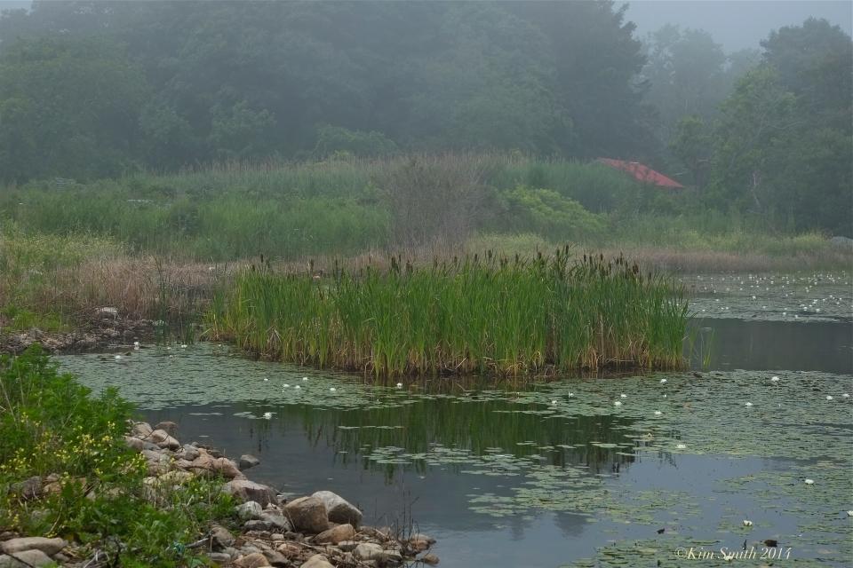 Foggy Niles pond -2 ©Kim Smith 2014