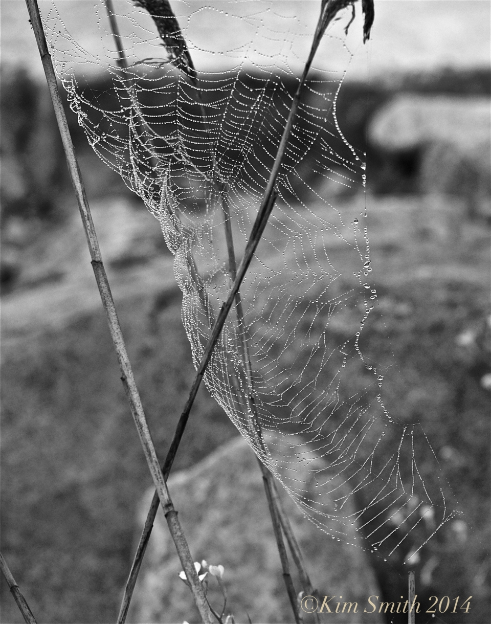 Spider's Web Niles pond -3 ©Kim Smith 2014