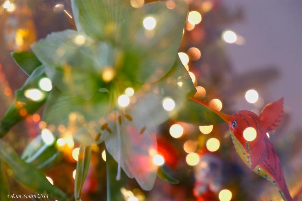 Amaryllis double exposure ©Kim ASmith 2014