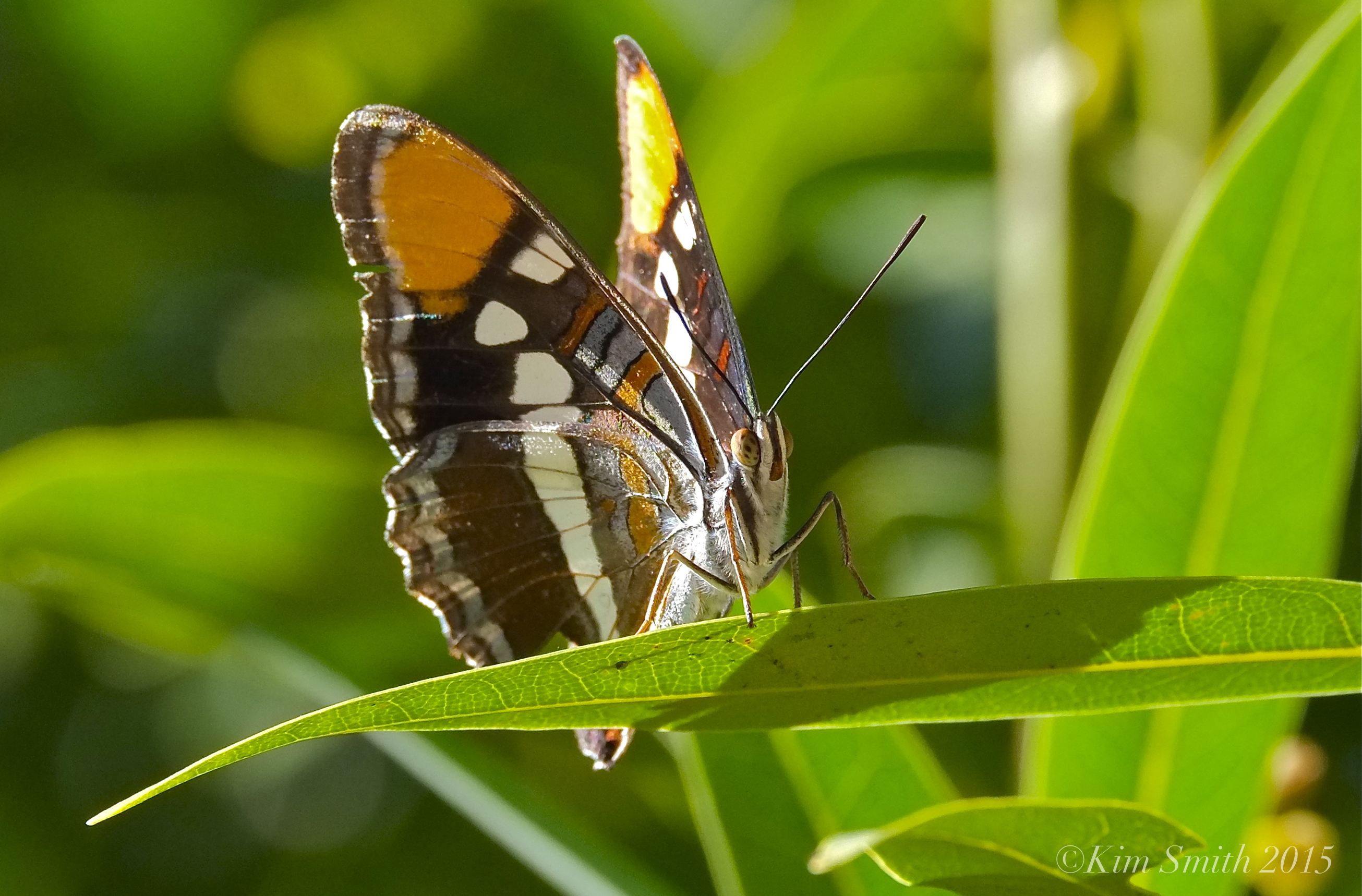 Butterfly - photo#42