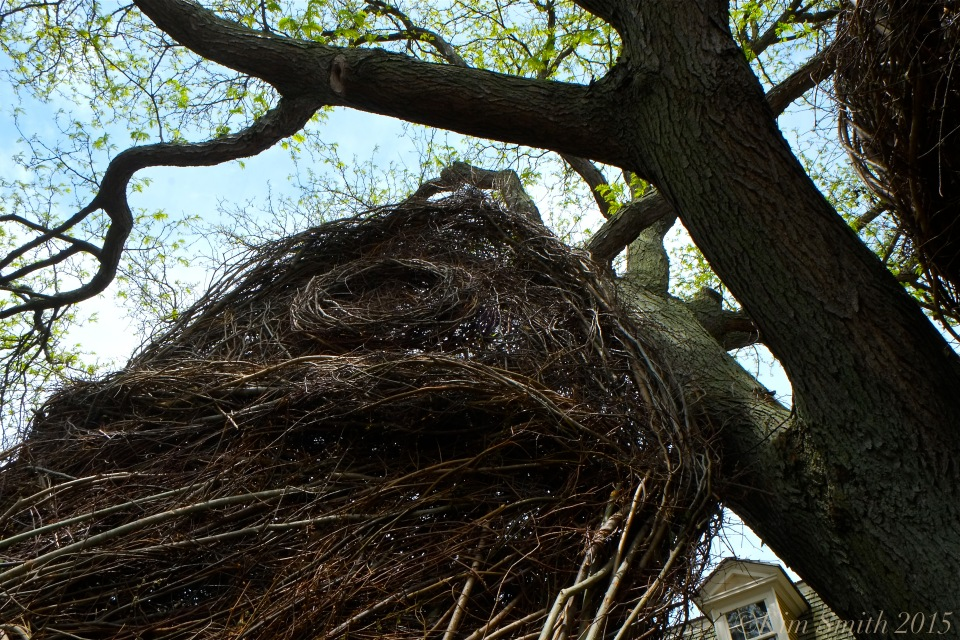 Patrick Dougherty Stickwork Peabody Essex -10 ©Kim Smith 2015