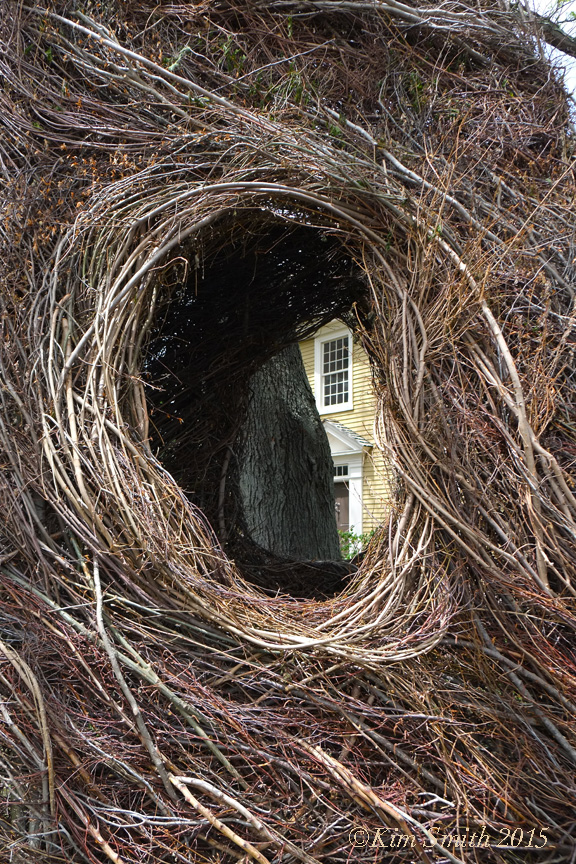 Patrick Dougherty Stickwork Peabody Essex -9 w ©Kim Smith 2015