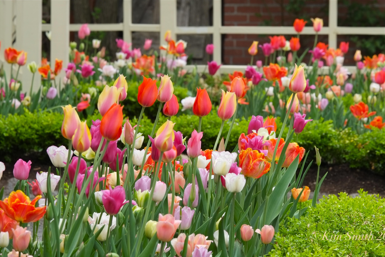 tulip garden | Kim Smith Designs