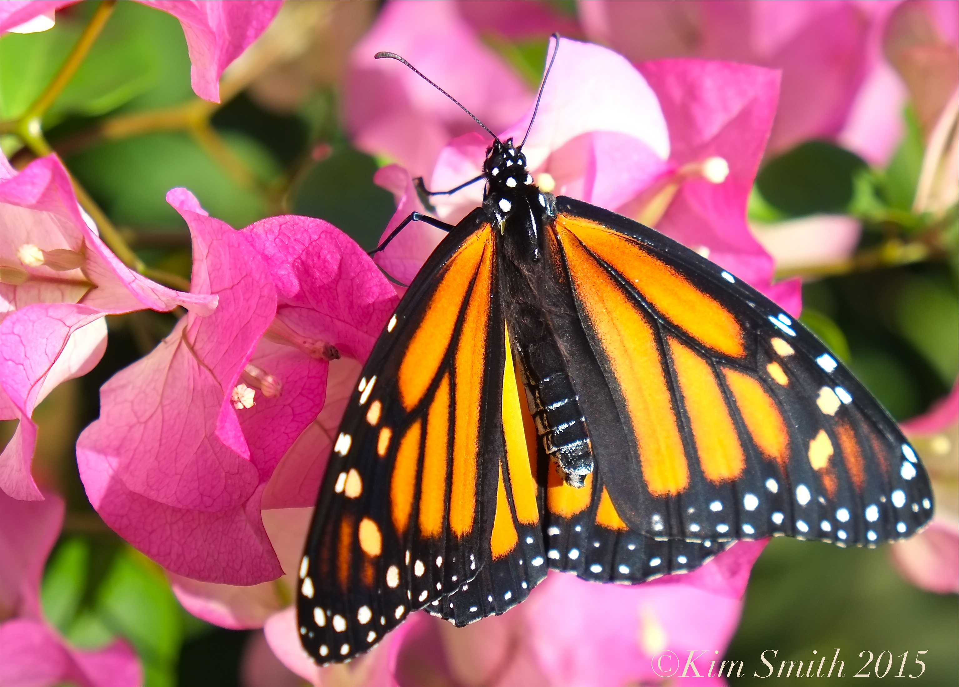 Butterfly - photo#39