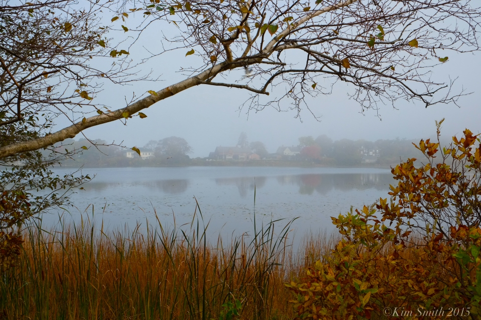 Niles Pond Foggy October morning -2 ©Kim Smith 2015