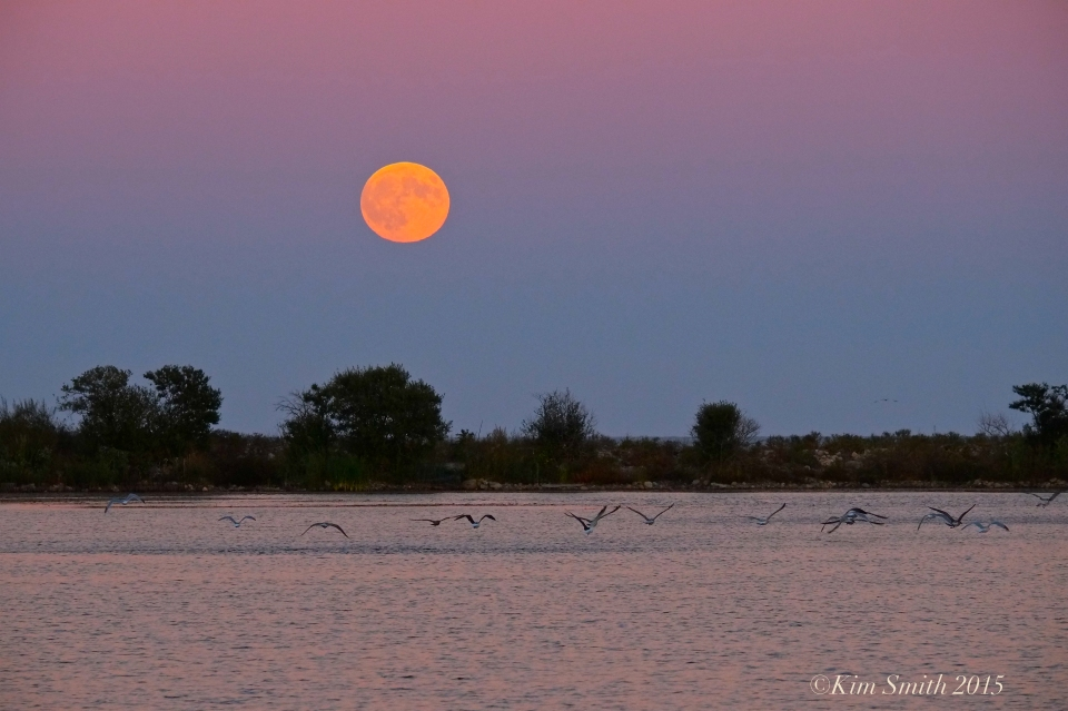 Super Blood harvest moon Rising ©Kim Smith 2015