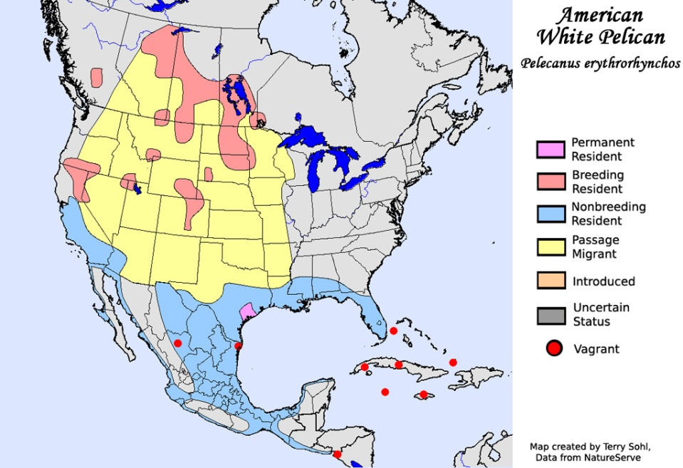 american_white_pelican_map_big