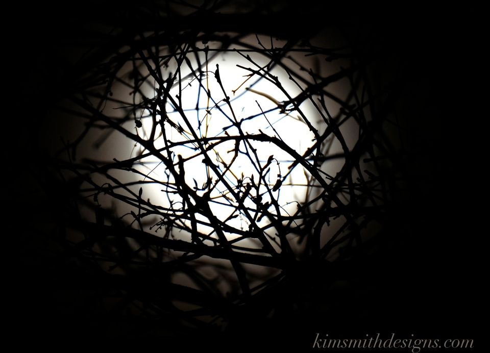 Snow Moon February Niles Pond Birch Tree kimsmithdesigns.com 2016 -4