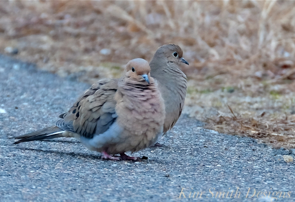 Mourning Dove Pair Cape Ann Kim Smith Designs.com