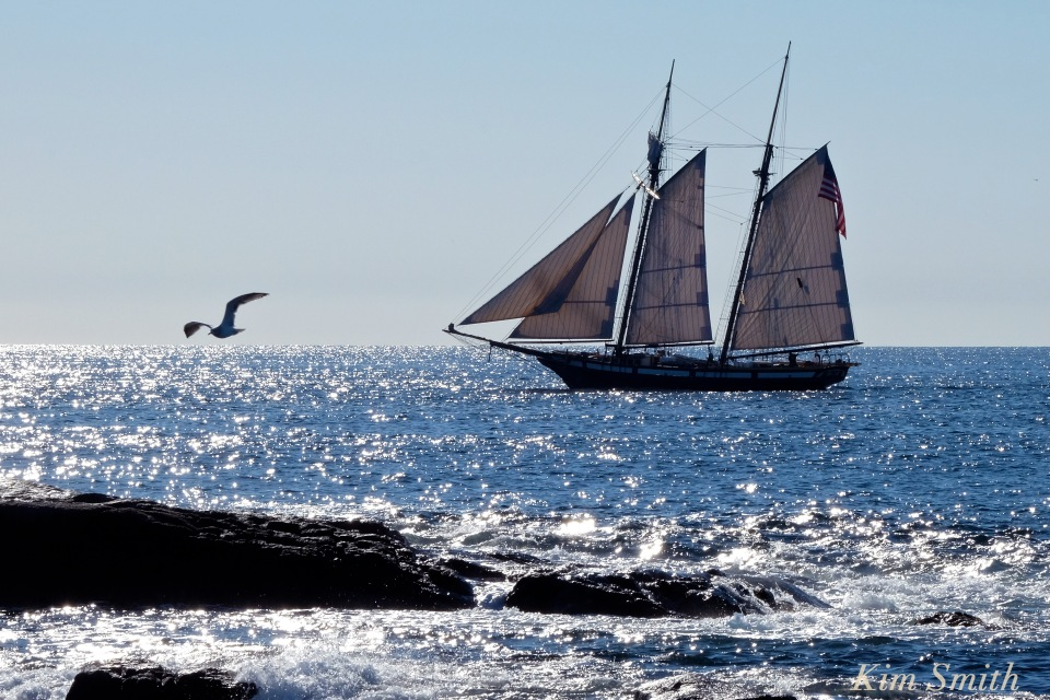 schooner-lynx-gloucester-seagull-copyright-kim-smith
