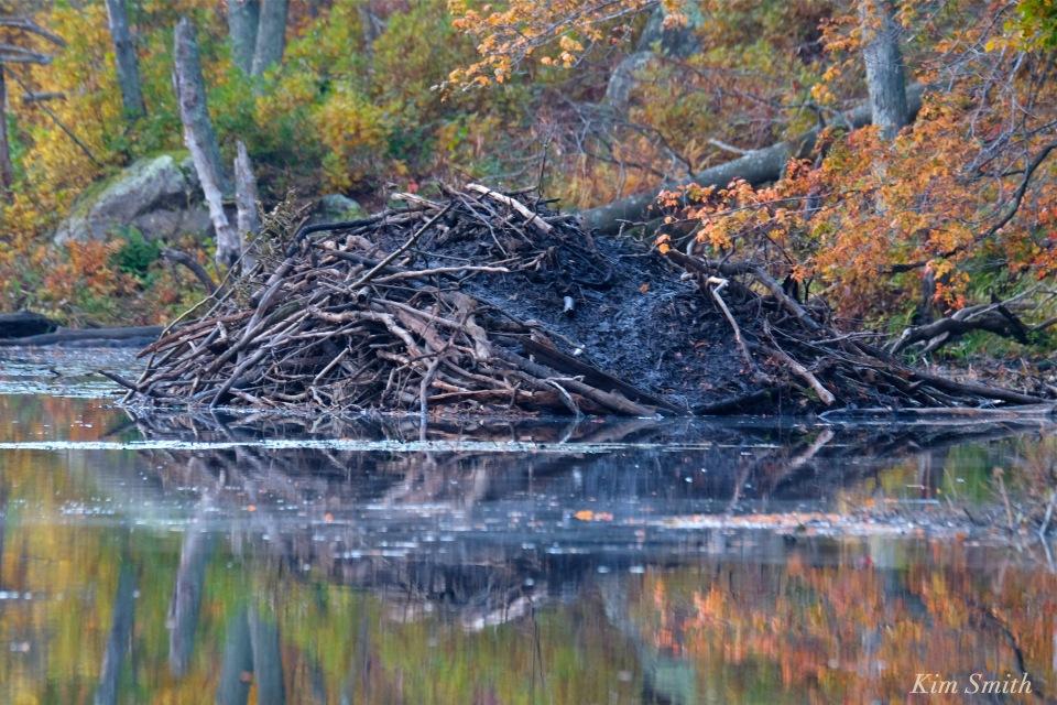 beaver-lodge-gloucester-massachusetts-copyright-kim-smith
