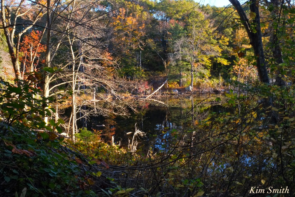 beaver-pond-gloucester-copyright-kim-smith
