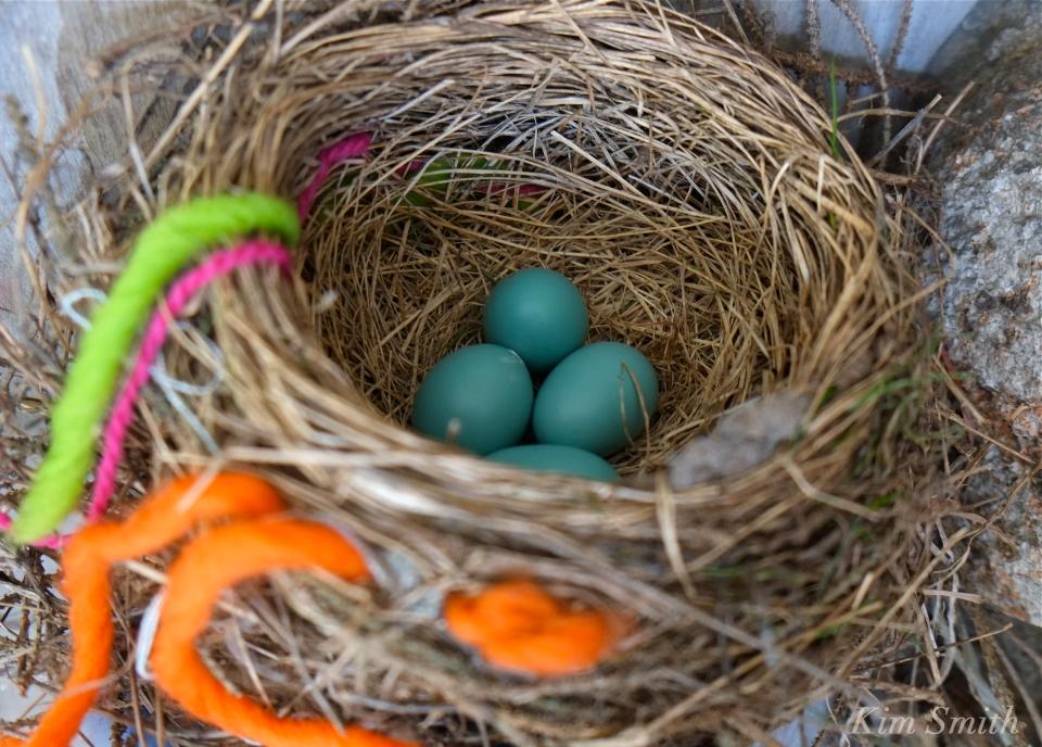 robins-nest-copyright-kim-smith