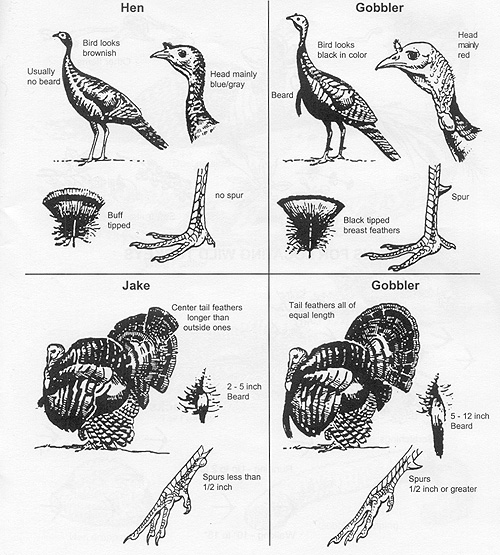 Tom Turkey Diagram Introduction To Electrical Wiring Diagrams