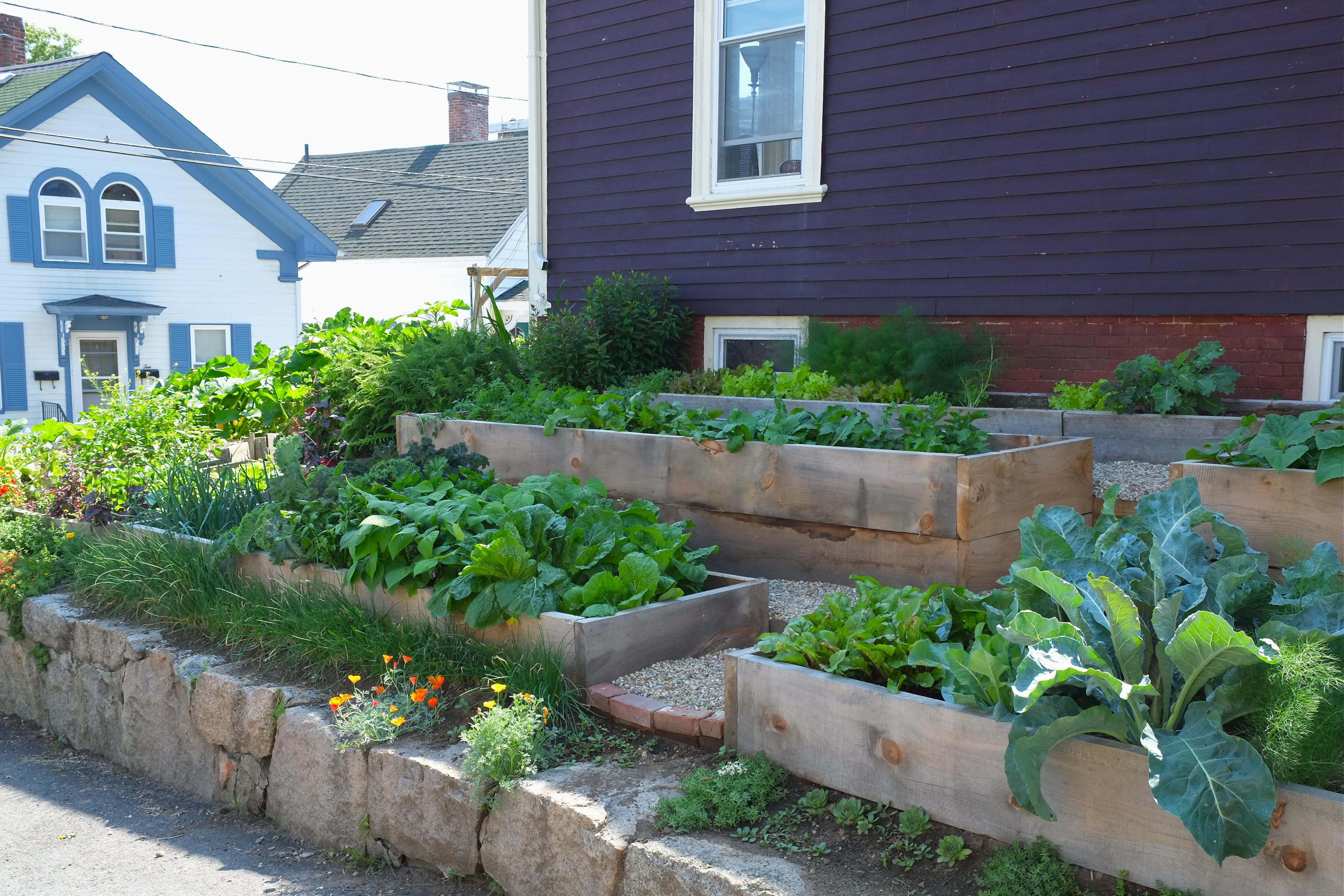 Lara S Garden Raised Beds Backyard Growers Incredible Edible Garden