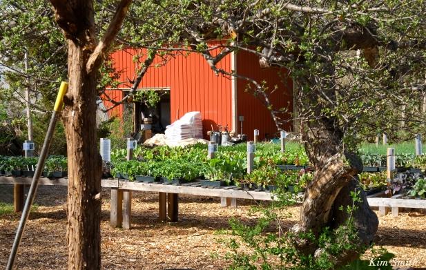 cedar-rock-gardens-kim-smith