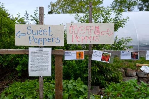 cedar-rock-gardens-peppers-2-copyright-kim-smith