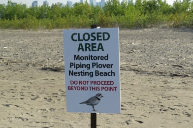 piping-plover-closed-area-sign