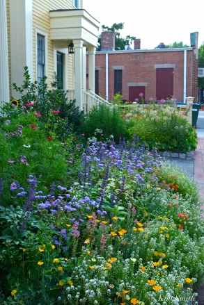 Mary Prentiss Inn Urban Pollinator Garden Cambridge MA -19 copyright Kim Smith