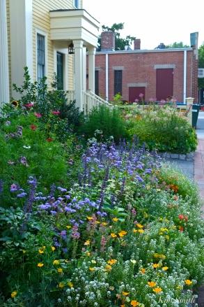 Mary Prentiss Inn Urban Pollinator Garden Cambridge MA -19 copyright Kim Smith