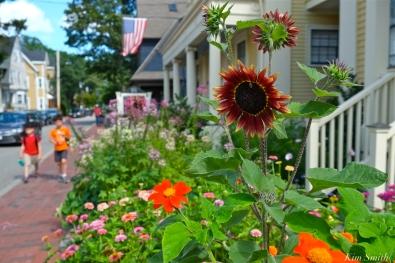 Mary Prentiss Inn Urban Pollinator Garden Cambridge MA -20 copyright Kim Smith