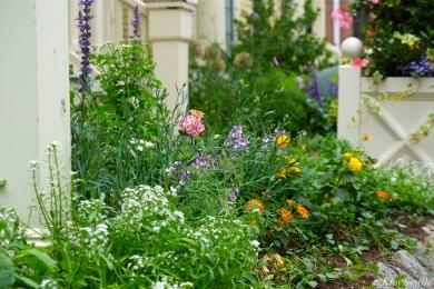 Mary Prentiss Inn Urban Pollinator Garden Cambridge MA -3 copyright Kim Smith