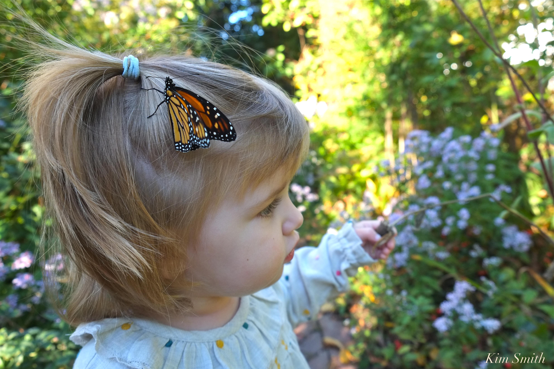 Last Monarch Of Season >> Monarchs And Ladies Last Of The Season S Butterflies Kim Smith