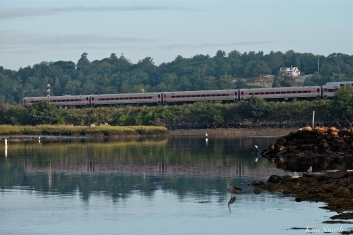 Gloucester to Boston Commuter Train Great Blue Heron copyright Kim Smith - 15