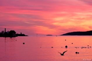 jodrey fish pier sunset gloucester massachusetts -3