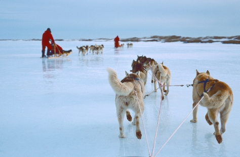 1-80 Quebec 2002, Iles de la Madeleine, dogsledding