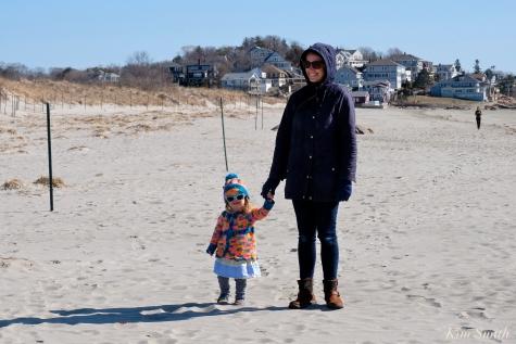 Piping Plovers Good Harbor Beach Gloucester Massachusetts copyright Kim Smith - 05