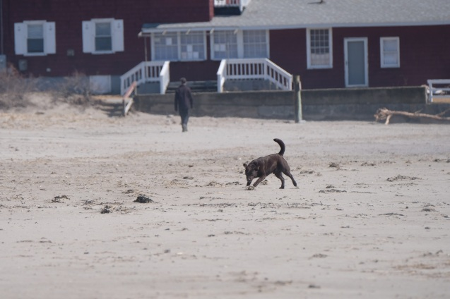 Dog Disturbance Good Harbor Beach Gloucester 4-6-19 c Kim Smith - 01
