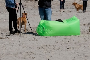 Dog Disturbance Good Harbor Beach Gloucester 4-6-19 c Kim Smith - 09