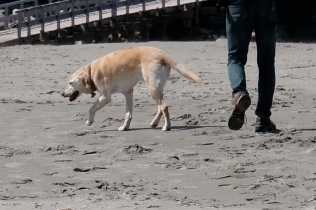 Dog Disturbance Good Harbor Beach Gloucester 4-6-19 c Kim Smith - 11
