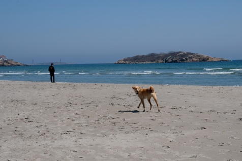 Dog Disturbance Good Harbor Beach Gloucester 4-6-19 c Kim Smith - 16