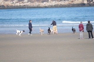Dog Disturbance Good Harbor Beach Gloucester 4-6-19 c Kim Smith - 17