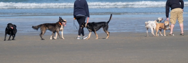 Dog Disturbance Good Harbor Beach Gloucester 4-6-19 c Kim Smith - 18