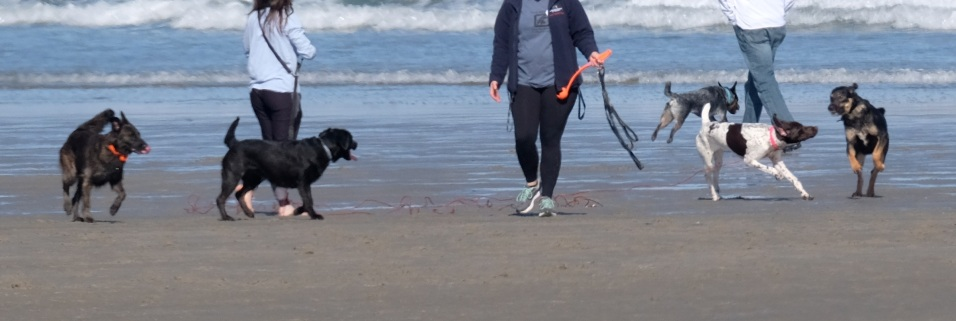 Dog Disturbance Good Harbor Beach Gloucester 4-6-19 c Kim Smith - 23