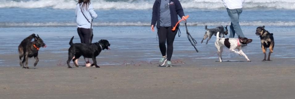 Dog Disturbance Good Harbor Beach Gloucester 4-6-19 c Kim Smith - 23