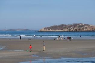 Dog Disturbance Good Harbor Beach Gloucester 4-6-19 c Kim Smith - 26