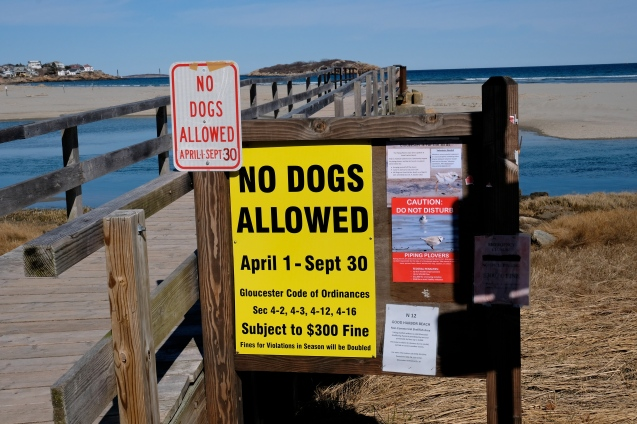 No Dogs Good Harbor Beach Gloucester Footbridge Entrance copyright Kim Smith